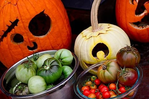 Tomatoes and Pumpkins