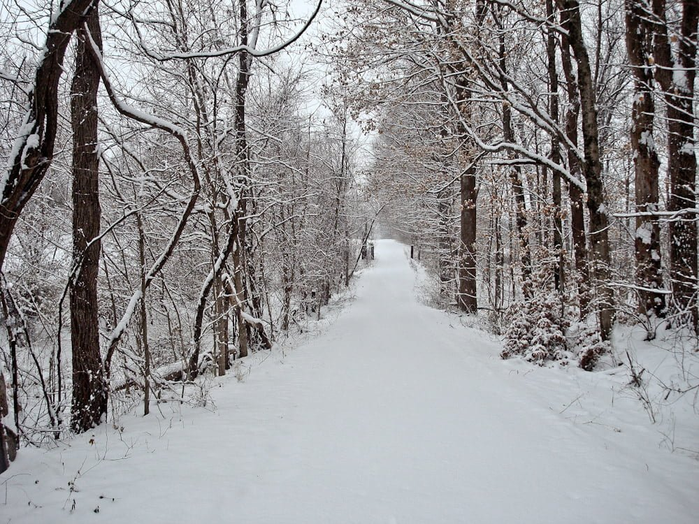 snowy road woods