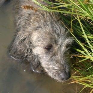 puppyface lake
