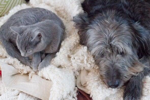 kittyface and puppyface