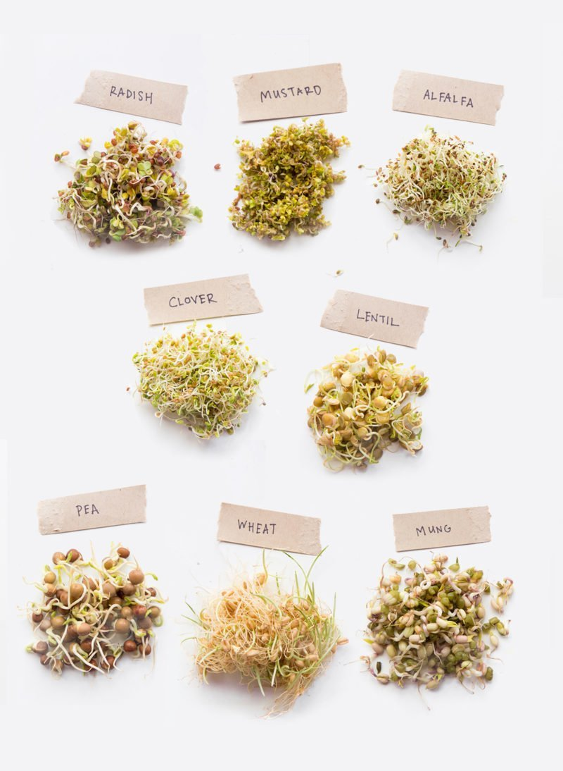 Sprouting 101 How To Sprout Anything And Why You Should Wholefully Bean Seed Germination Diagram Individual Piles Of Sprouts Labeled With The Type Radish Mustard Alfalfa