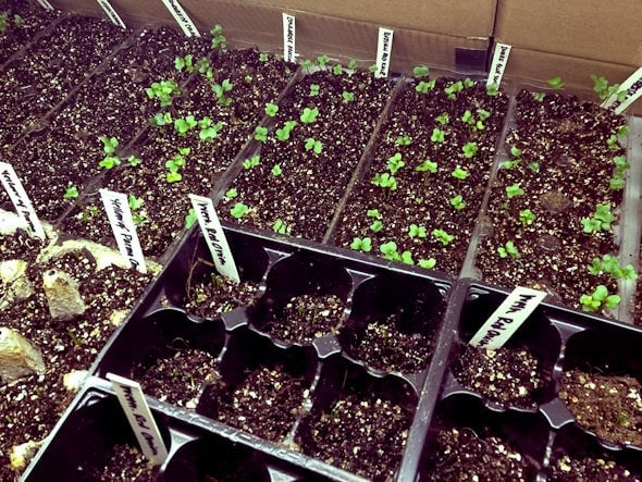 seedlings garden