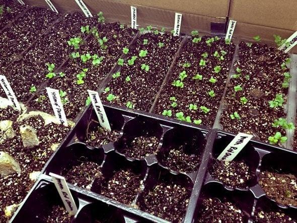 seedlings garden