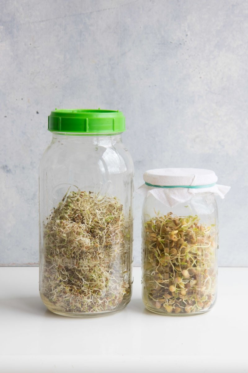 Sprouting 101 How To Sprout Anything And Why You Should