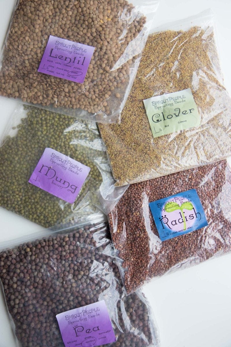 Overhead shot of bags of sprouting seeds - pea, radish, clover, mung bean, and lentil seeds