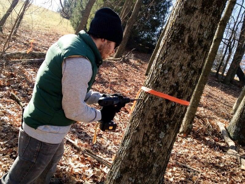 babyface drill tree