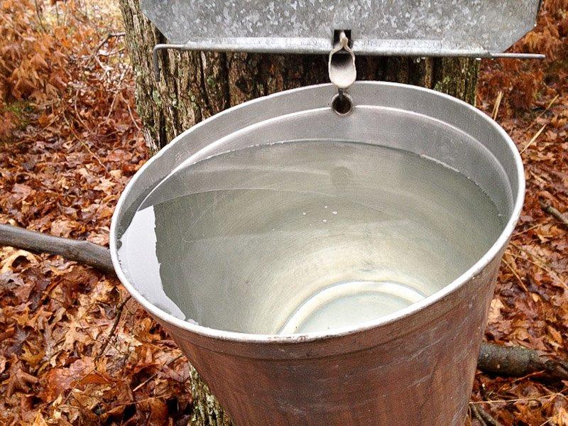 full sap bucket
