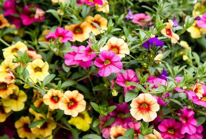 flowers stock