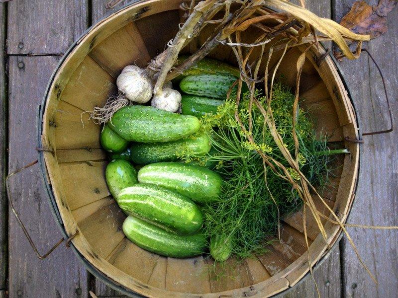 cucumbers basket