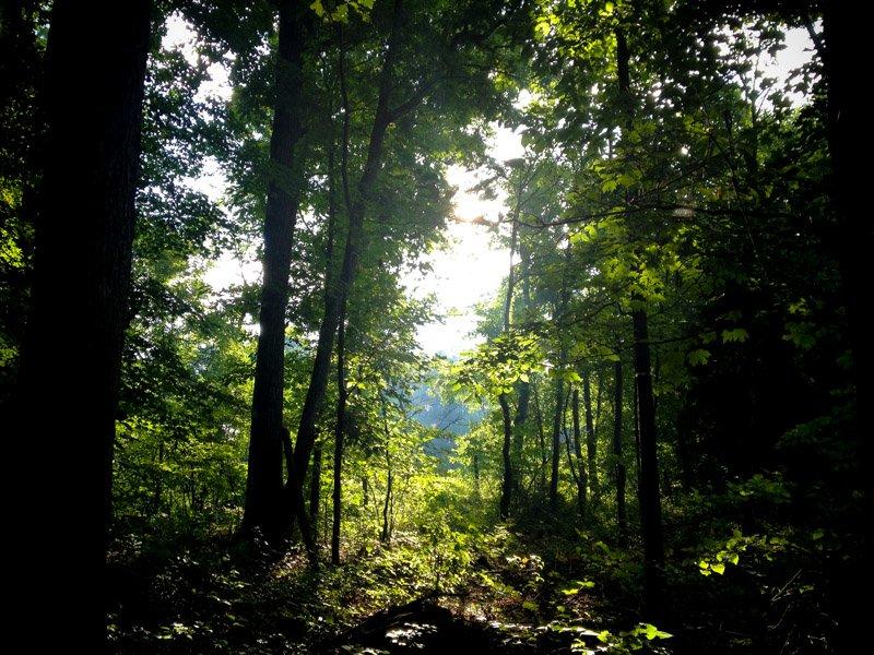 trees woods stock