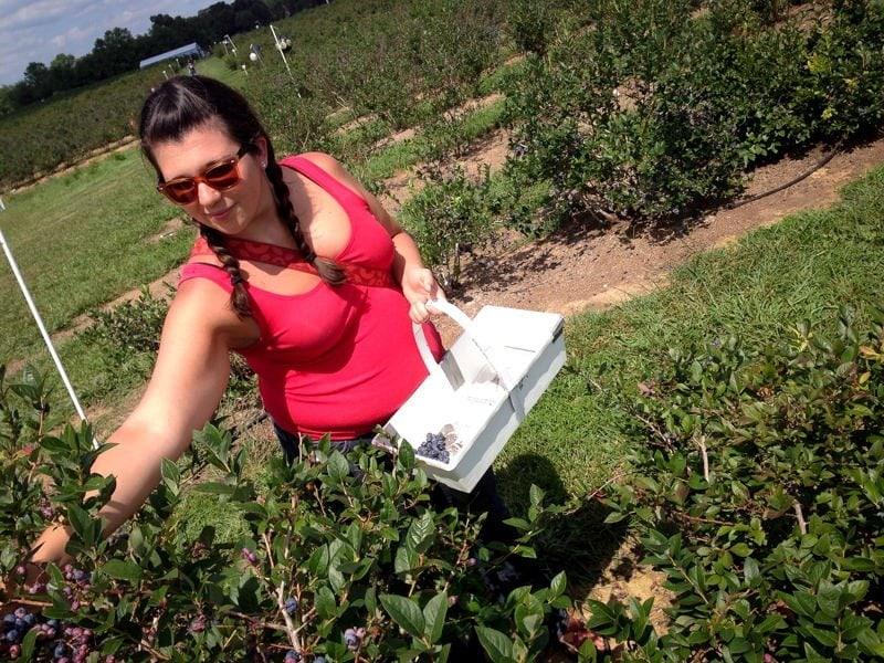 me blueberries pick