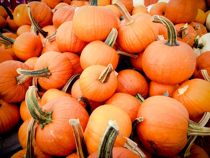 pumpkins stock
