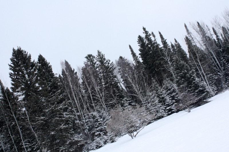 snow canada trees