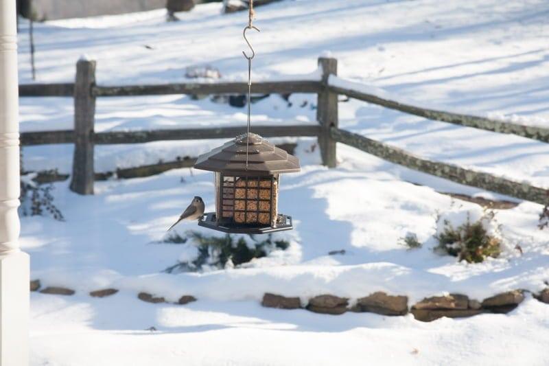 bird feeders snow