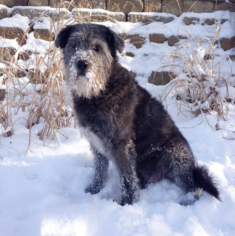 puppyface snow