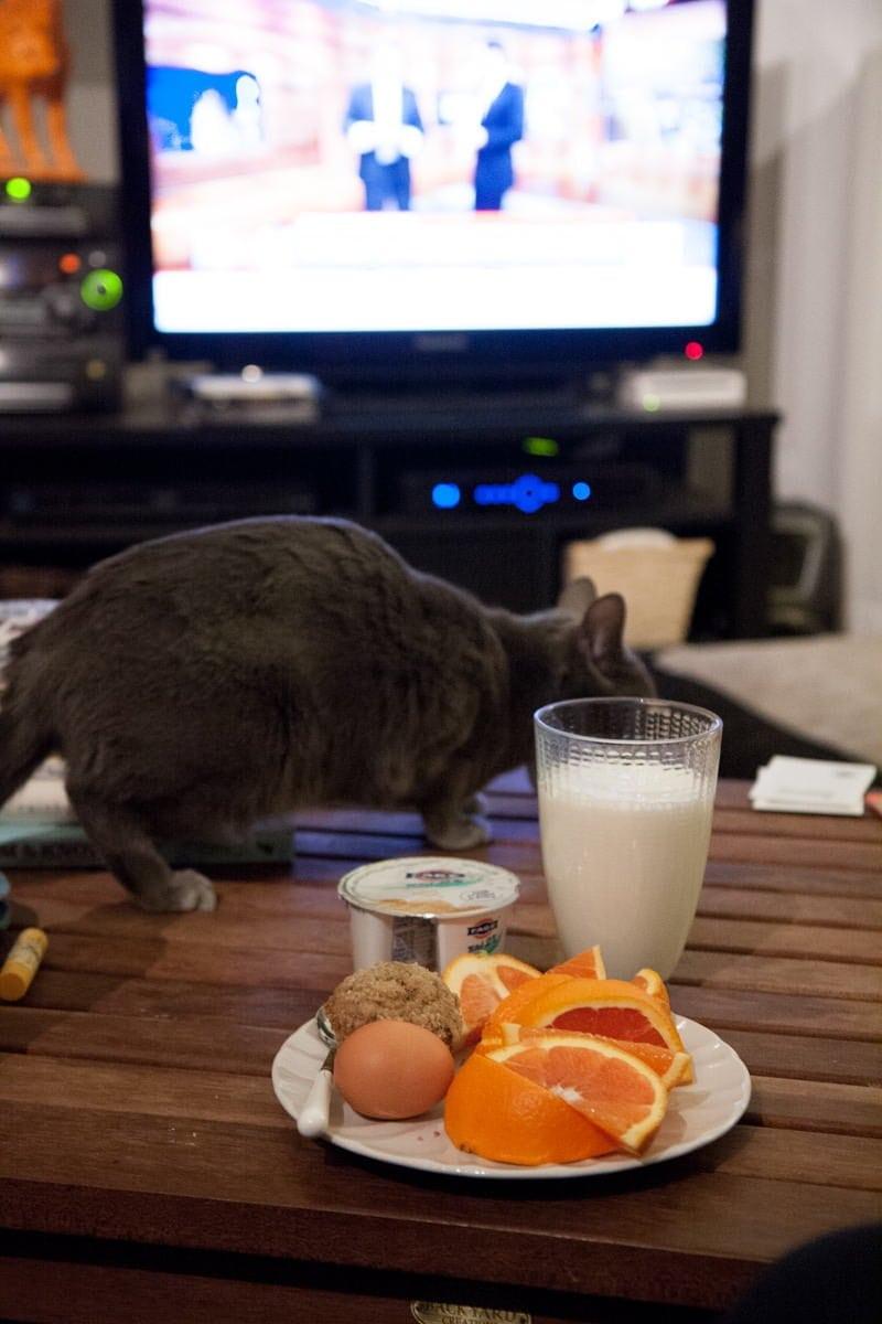 kitty breakfast