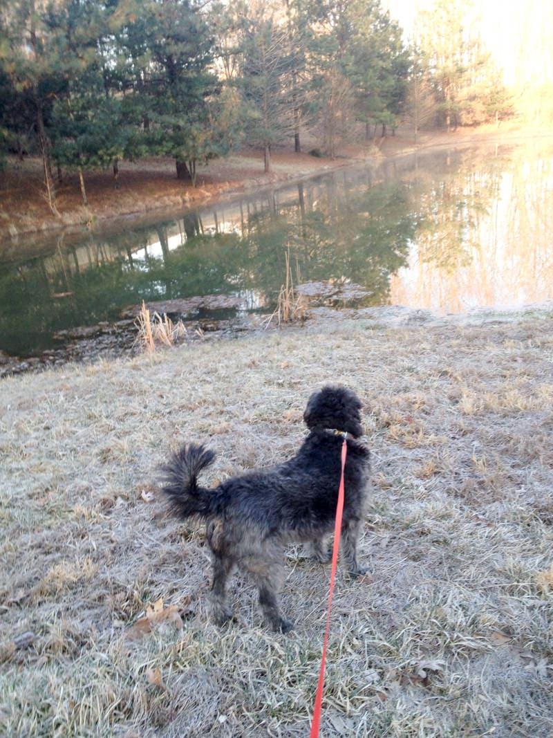 puppyface walk lake