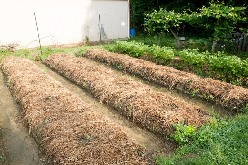 raised rows garden