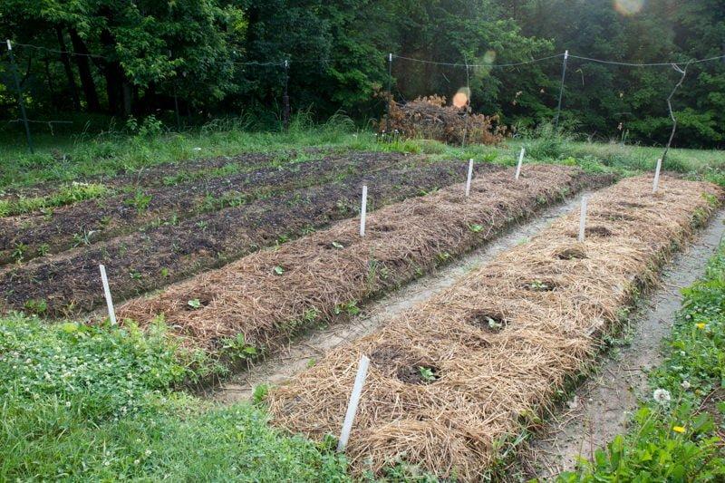 gourds pumpkins garden