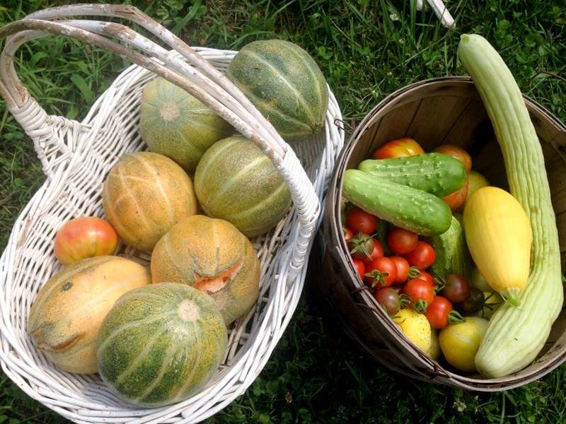 Garden Basket