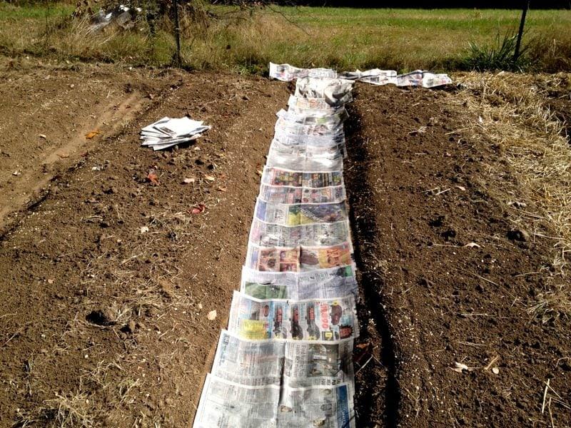 Newspaper Garden