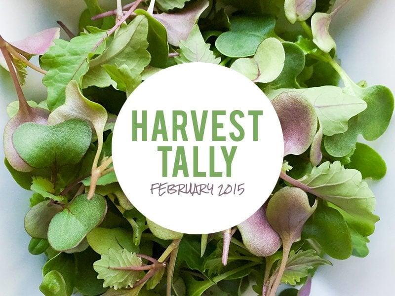 Harvest Tally: February 2015