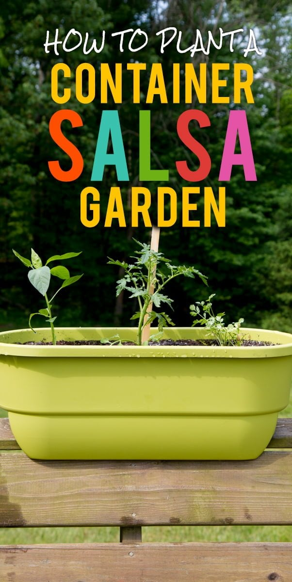 How To Plant A Container Salsa Garden