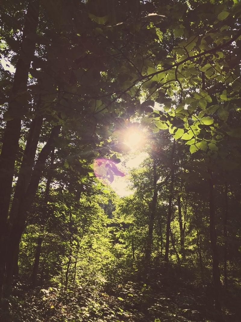 Woods Trees Sun