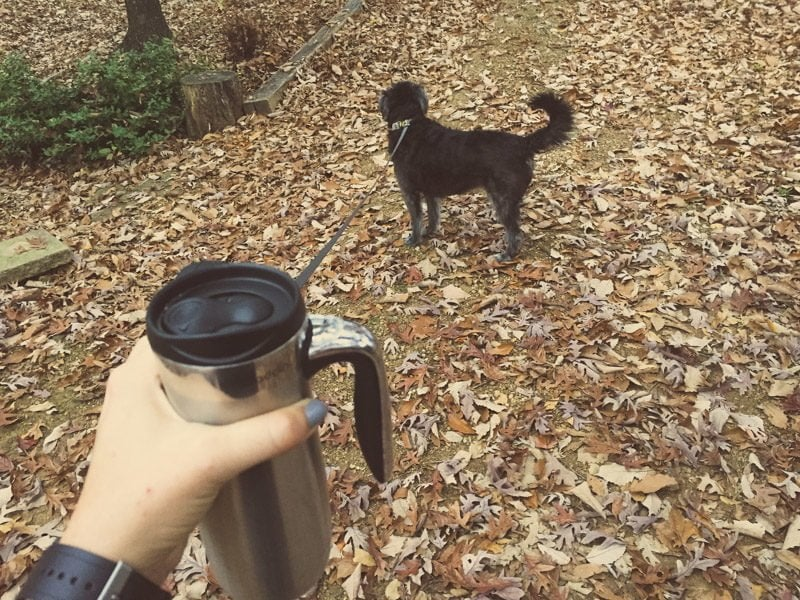 Coffee Dog
