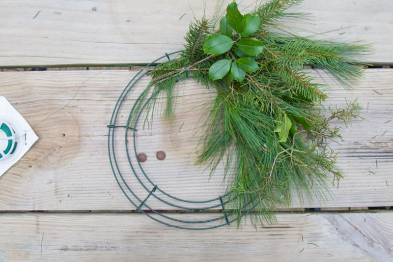 A few bundles of fresh greenery on a wreath form