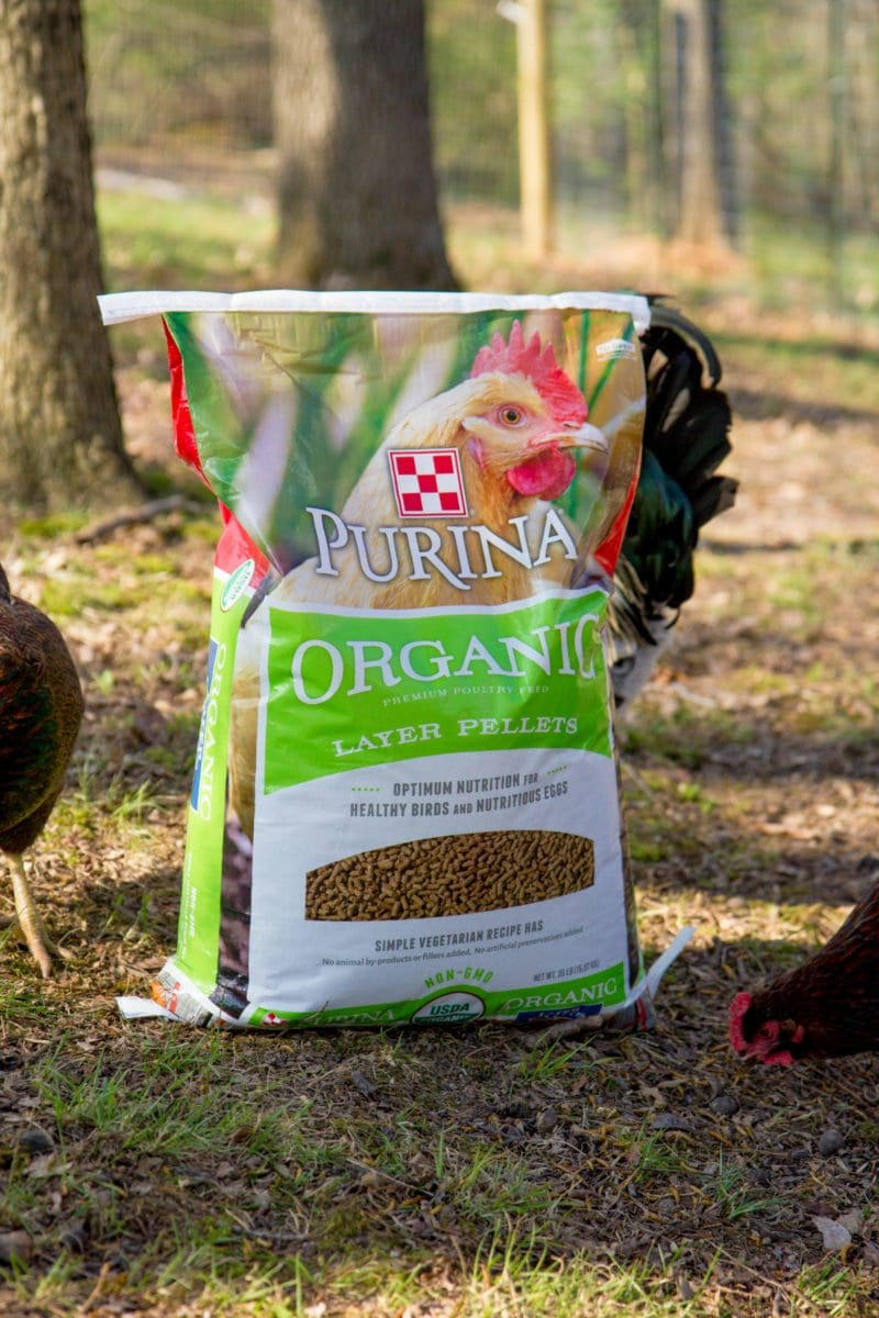 How To Start Raising Backyard Chickens In 7 Simple Steps Wholefully Take A Look At What Each Part Of The Chicken Is Called We Choose Feed Our Organically And Really Like Purina Line Organic Poultry Feeds Love It Because They Are Readily Available