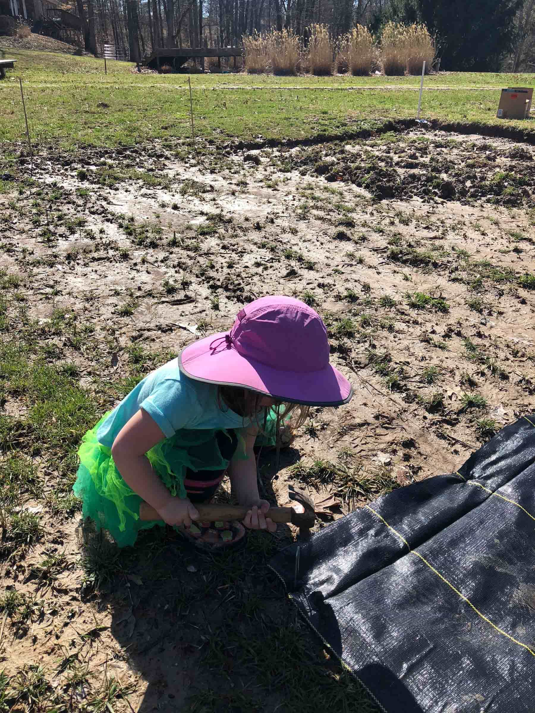 Toddler helping put in landscape fabric