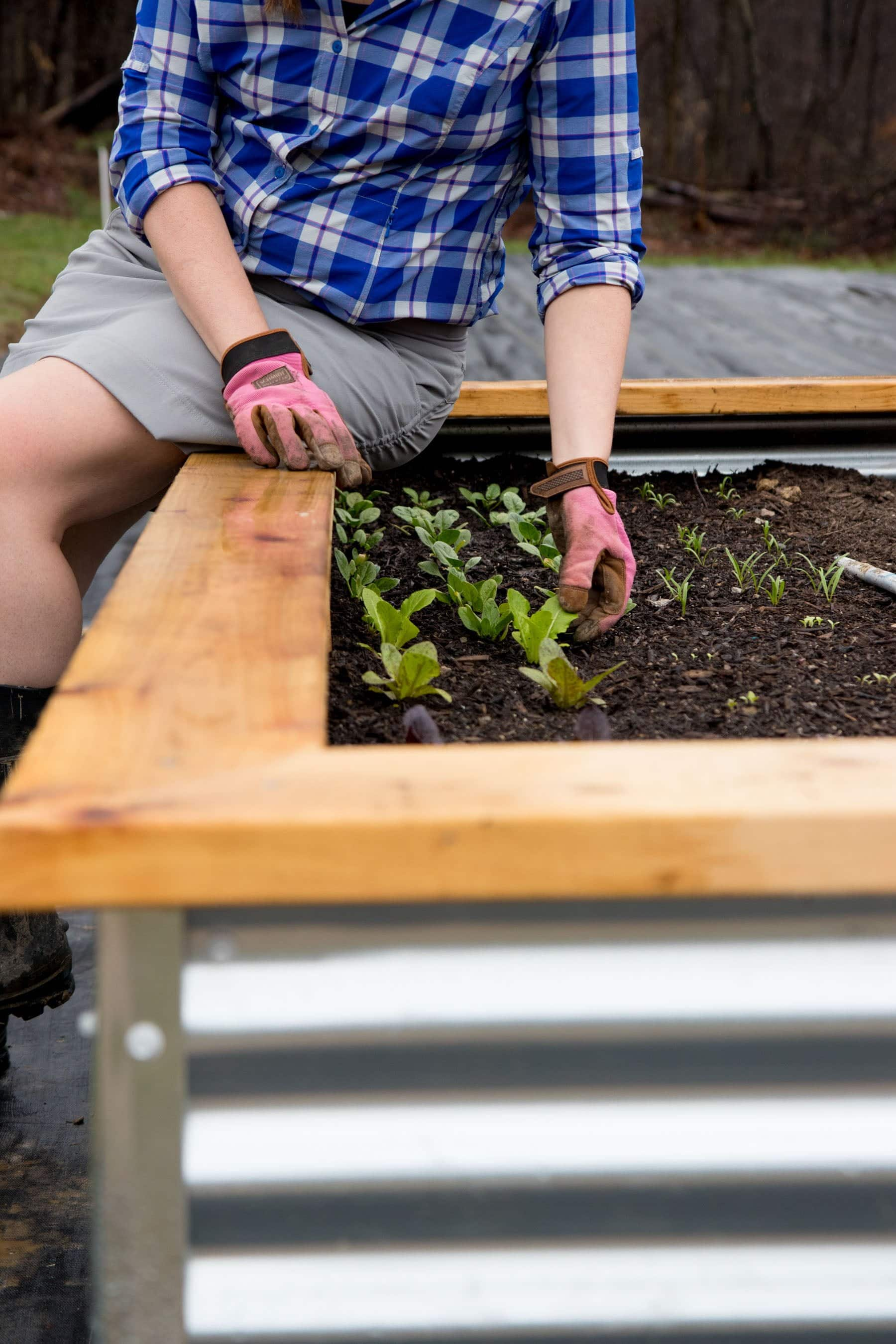 Person sitting on the side of a raised bed tending to lettuce plants