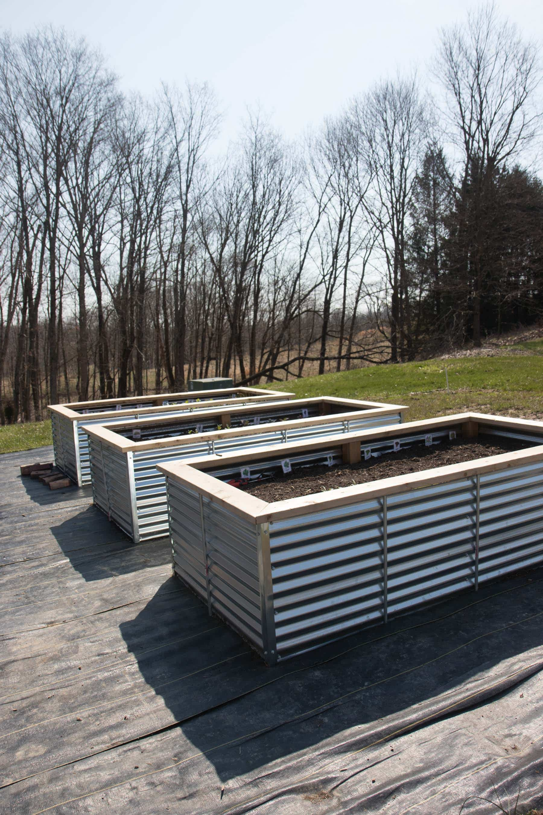 Three galvanized steel raised beds lined up on landscape fabric
