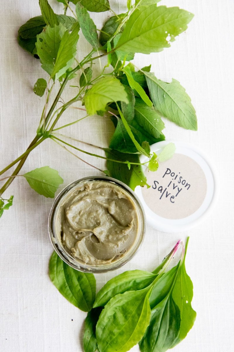 Overhead shot of Homemade All-Natural Poison Ivy Salve in a jar, surrounded by plantain and jewelweed leaves
