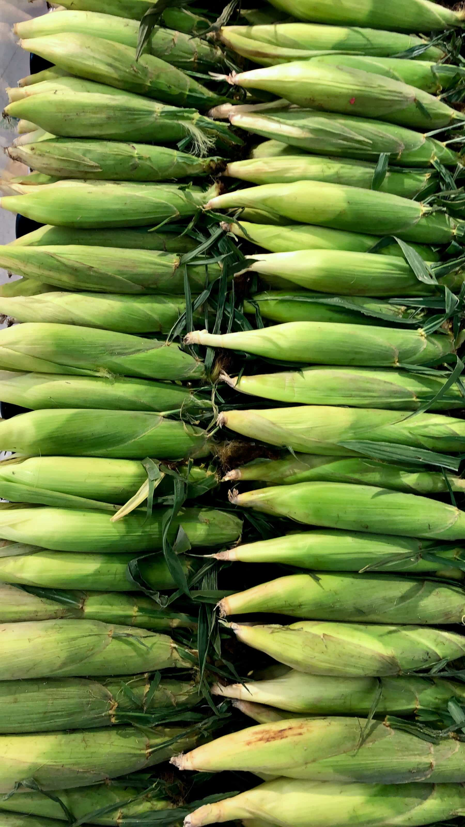 Ears of corn lined up for purchase