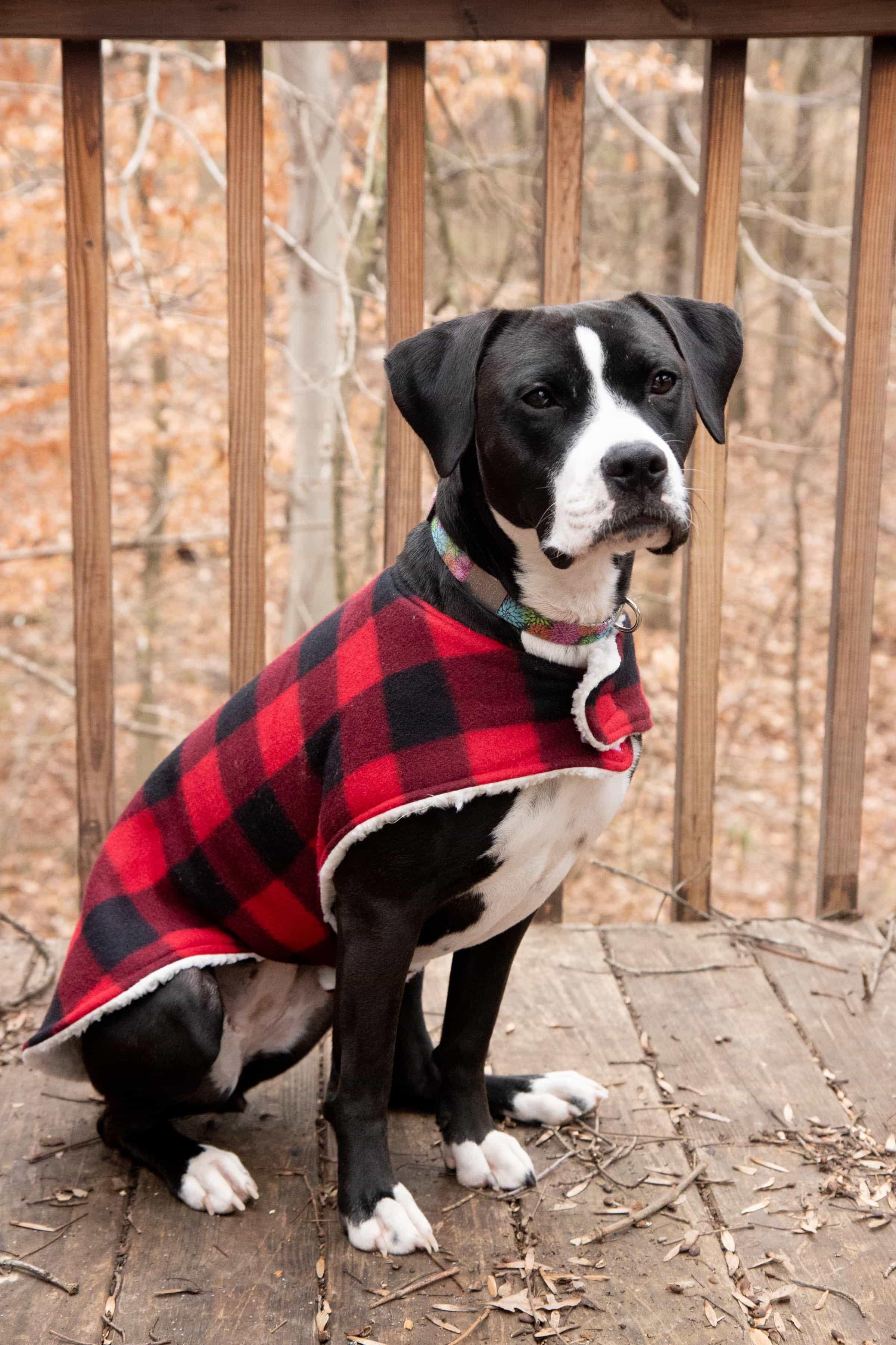 c04f71eaf How to Sew a Cozy Custom Dog Coat in Less than an Hour