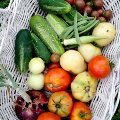 Tomatoes, cucumbers, and other freshly harvested vegetables sit in a white wicker basket.